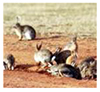 Managing rabbits